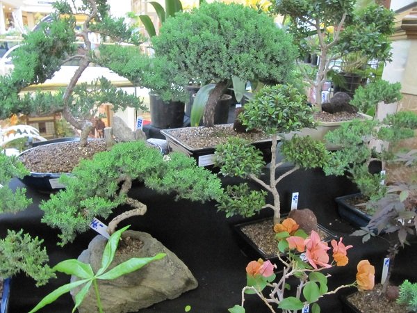 Rare and exotic plants were offered for sale at the how, including these bonsai trees.