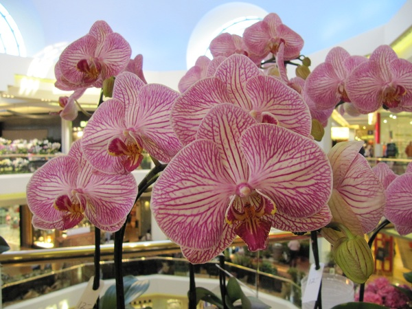 Orchid flowers are what attracts many visitors to the Annual Spring Garden Show.