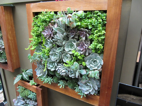 These vertical succulent gardens attracted many visitors to Vertical Garden Solutions' booth.