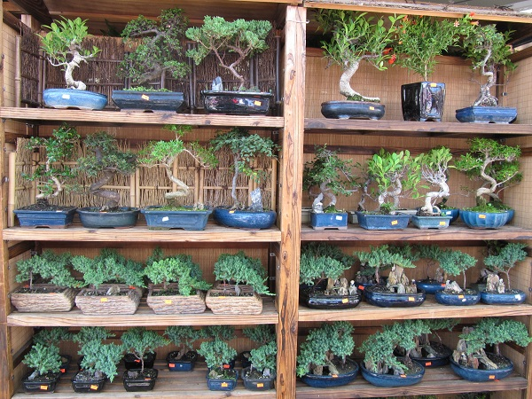 Many bonsai trees were for sale for as little as $8.