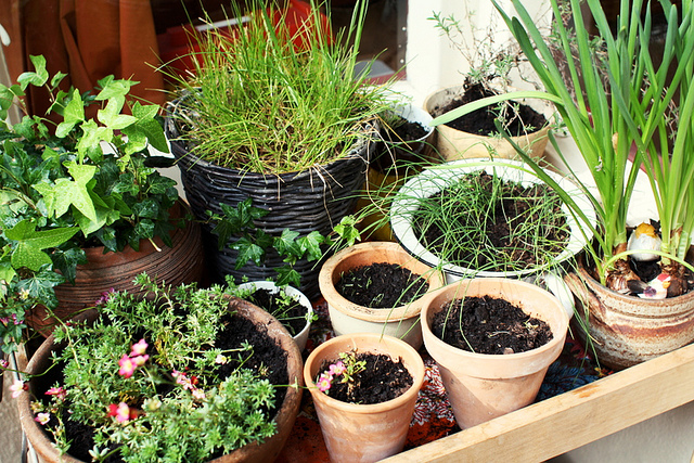 Balcony container garden design