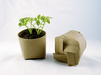 Recycled seed sprout container plant