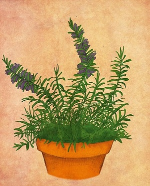 How to Grow and Care for Rosemary in Containers