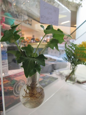 Suction Cup Vase Cuttings