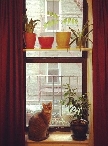 Indoor cat and plants
