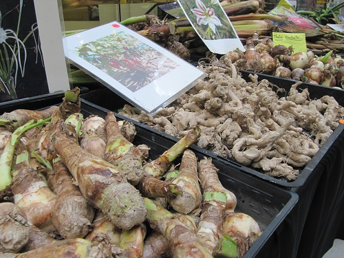 Flower Bulbs Tubers