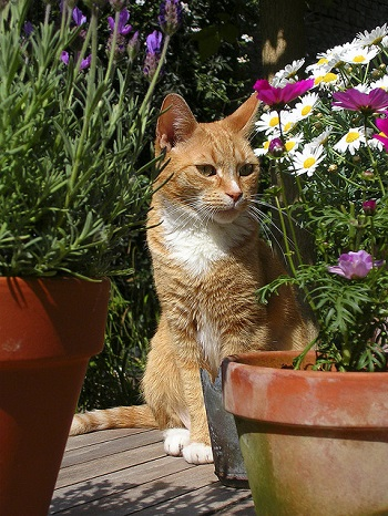 Orange cat flower pots