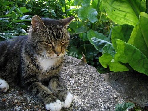 Cat on rock in garden