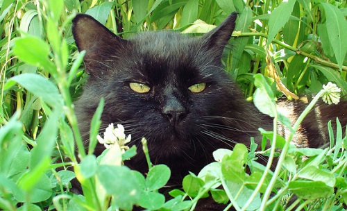 Black cat resting in the garden