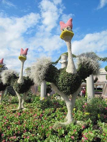 Fantasia Ostrich Epcot International Flower and Garden Festival