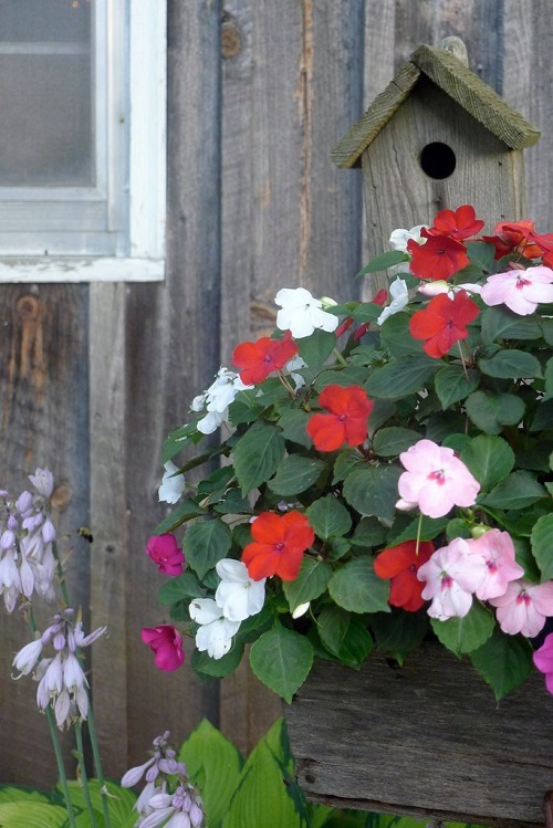 Impatiens flowers and birdhouse