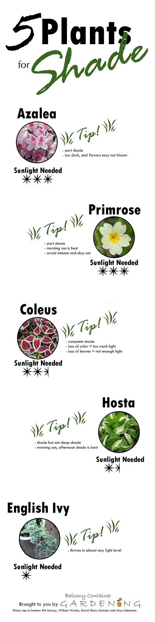 Shade Plant Infographic